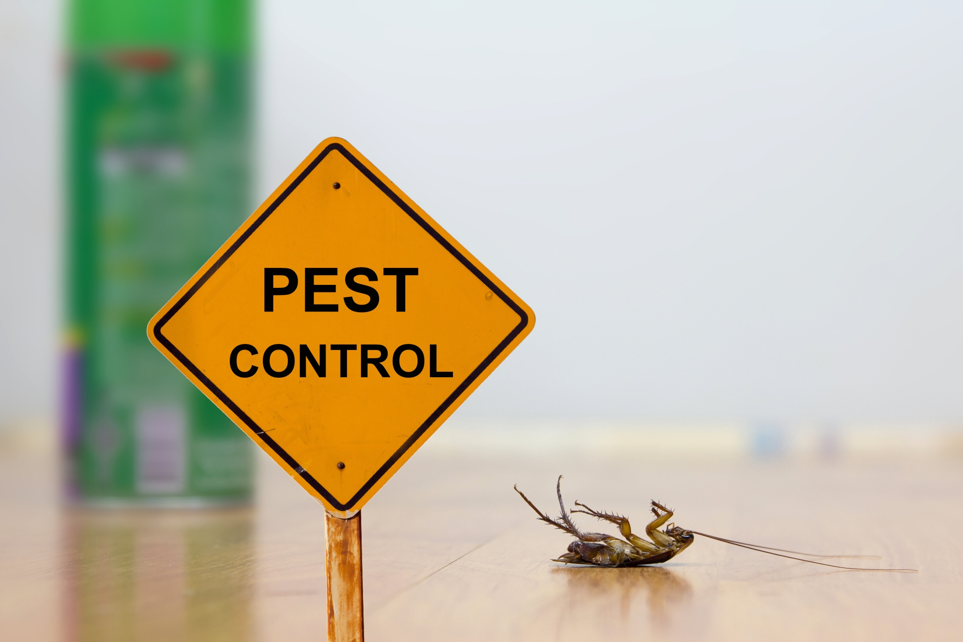 24 Hour Pest Control, Pest Control in Tolworth, Berrylands, KT5. Call Now 020 8166 9746